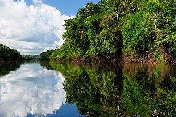 Der Amazonas - die Lunge der Welt geht verloren