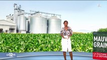 La culture du soja contribue à la déforestation
