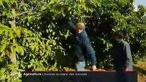 Chili : quand la culture de l'avocat prive d'eau les habitants