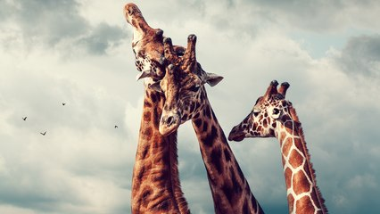 9 Travel Destinations Perfect for Animal Lovers