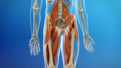 Muscle Strain Injuries of the Hip