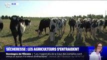 Sécheresse: les agriculteurs doivent s'entraider pour nourrir leur bétail