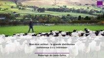 Bien-être animal : la grande distribution commence à s'y intéresser