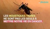 Moustiques : cette maladie peut vous tuer en quelques jours