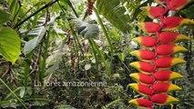 L'Amazonie, fabrique à nuages