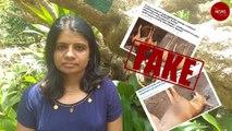 Were stray dogs shot dead in Shoranur in Kerala?