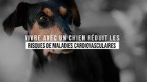 Vivre avec un chien réduit les risques de maladies cardiovasculaires