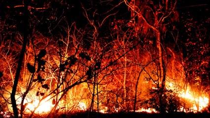 Bolivia: Ecological disaster as Amazon blazes rage