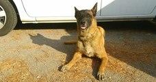 Dans l'Hérault, le chien Gibson a permis de sauver une femme du suicide
