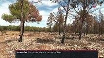 Incendies : comment les terres brûlées renaissent de leurs cendres