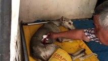 Bıçaklanarak yaralanan tazı tedavi altına alındı
