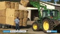 Lozère : les éleveurs manquent de paille