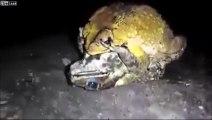 Reproduction des grenouilles, voilà comment ça marche !