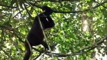 A Kingdom For The Dzanga Gorillas (Trailer)