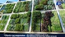 Diseñan el primer jardín  vertical de  África / La Buena Noticia