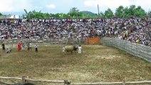 Buffalo fighting festival|Buffalo fighting skills|Festival de combat de Buffalo | Compétences de combat de Buffalo |