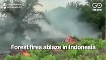 Forest Fires Ablaze In Indonesia