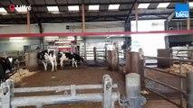 Comment recycler les bouses de vache ?