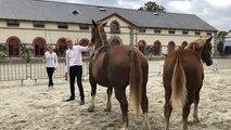 Concours départemental du cheval breton