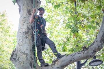 Paris : un militant écolo perché en haut d'un arbre devant le ministère