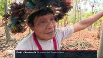 Amazonie : les tribus amérindiennes au secours de la déforestation
