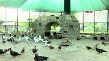 Tarsus hayvan parkı'nda hayvanların ömrü uzuyor