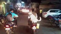Pooch riding pillion wows commuters in central India