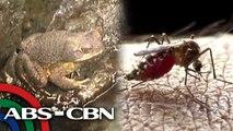 Palaka kontra-dengue | Rated K