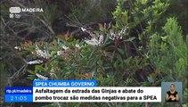 Sociedade Portuguesa de Estudos das Aves não aprova a asfaltagem da Estrada das Ginjas em São Vicente