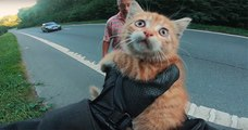 Un motard sauve d'une mort certaine un chaton abandonné qui se trouvait au milieu de l'autoroute