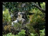 WATCH: New PH Eagle hatched in Zambo del Norte