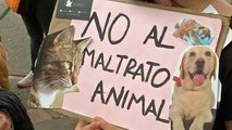 Animals lovers in Colombia take to the streets to combat abuse