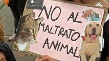 Une marche pour la défense des animaux en Colombie