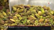 La pistache fait son retour en Provence