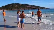 Des dizaines de dauphins viennent s'échouer sans raison sur cette plage brésilienne