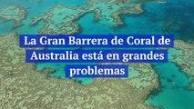 La Gran Barrera de Coral de Australia está en grandes problemas