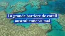 La grande barrière de corail australienne va mal