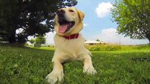 Human Actions Fundamentally Changed Dogs' Brains, Study Finds