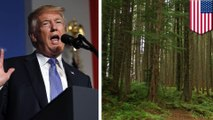Alaskan rainforest could be opened for mining, logging