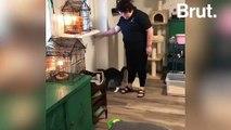 En Norvège, un hôtel met les chats à l'honneur