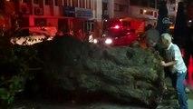 Ağaç devrildi: 1 yaralı