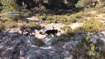 Perros colaboran en la búsqueda de Blanca Fernández Ochoa