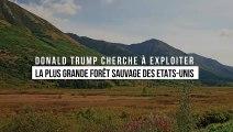 Environnement : Donald Trump cherche à exploiter la plus grande forêt sauvage des Etats-Unis