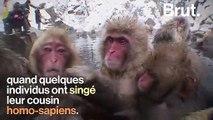 Pourquoi certains macaques aiment les sources d'eau chaude ?