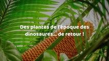 Des plantes de l'époque des dinosaures repoussent à cause du réchauffement climatique