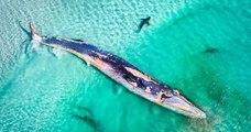 Voici les résultats d'un concours qui récompense les plus belles photos venant d'Océanie