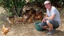 Agroforesterie : des arbres pour favoriser le bien-être animal