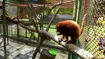 Animales silvestres como mascotas, amenaza para la fauna en Colombia