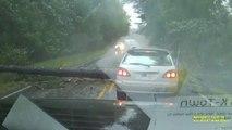 Un conducteur se prend un arbre en pleine tempête et évite le pire. Bon karma