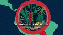 Brésil : six chiffres pour comprendre la déforestation en Amazonie
